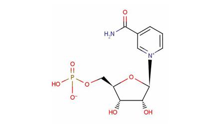 NMN(烟酰胺单核苷酸)是什么?